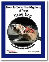 How to Solve the Mystery of Your Itchy Dog